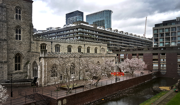 london england tree blossom barbican church