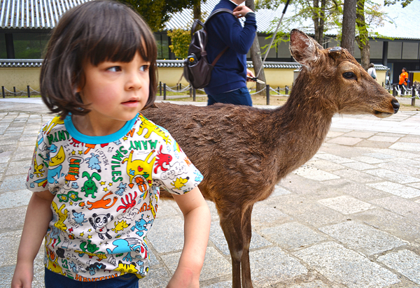 todaiji deer temple nara japan mia
