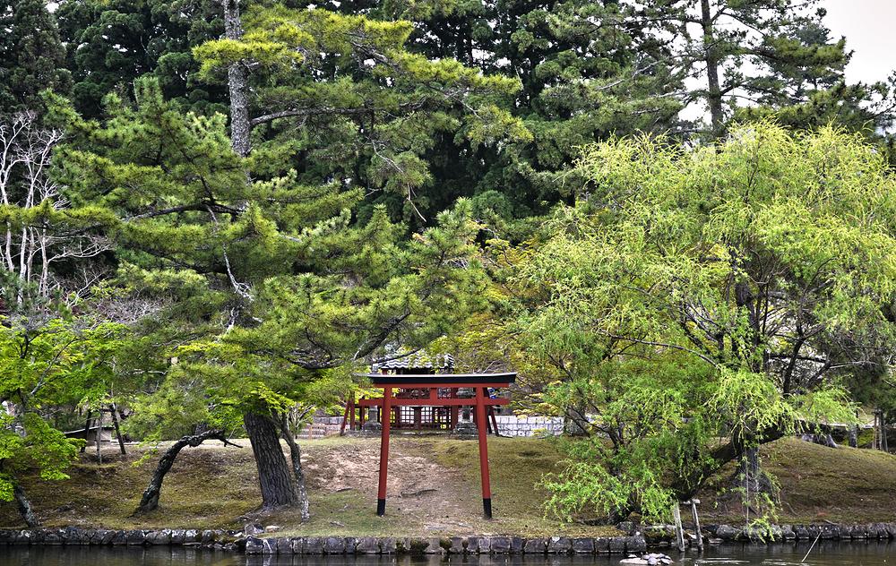 todaiji torii shrine nara japan tree