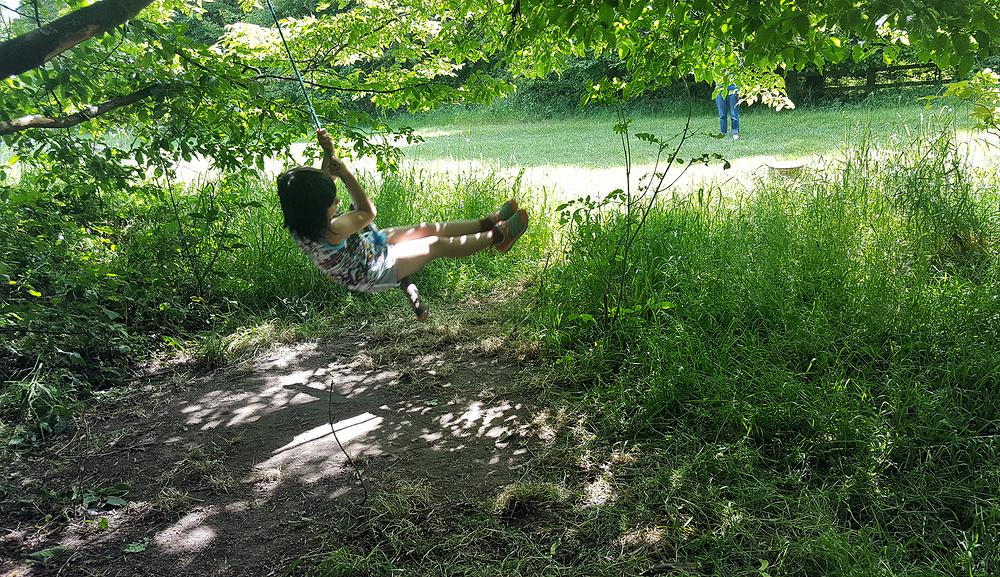 mia england lockdown park tree horton-country-park