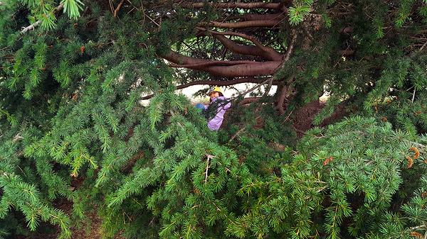 england lockdown kew-gardens london pine tree mia