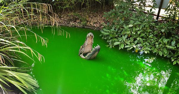 new-malden england alligator mini-golf