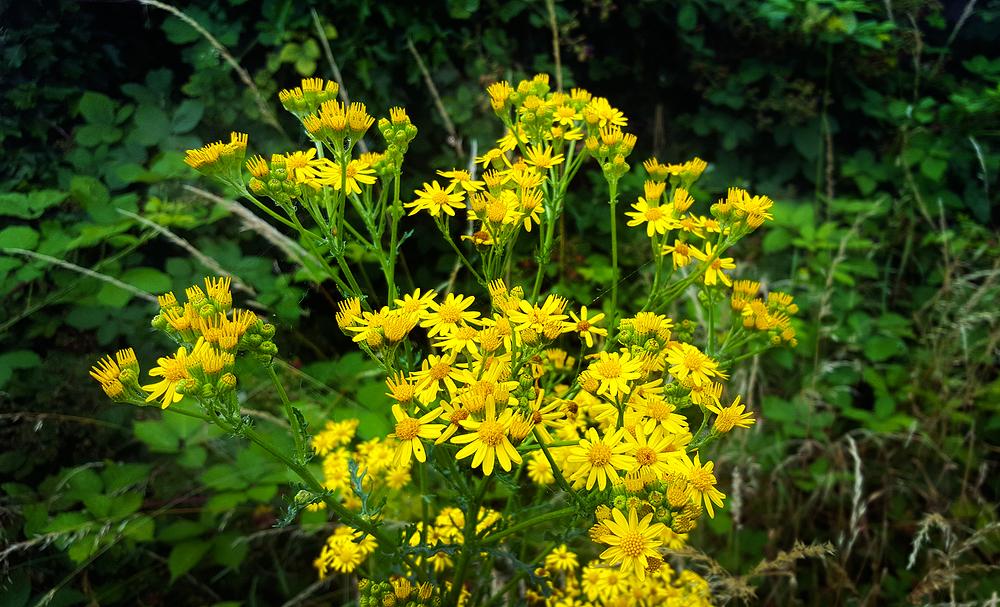 garden worcester-park england flower