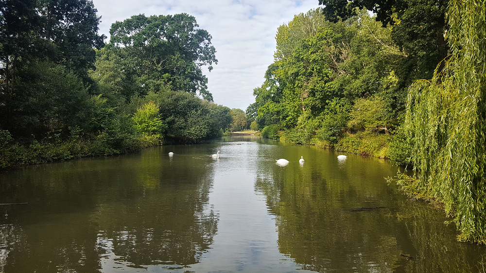 bushey-park england park swan pond