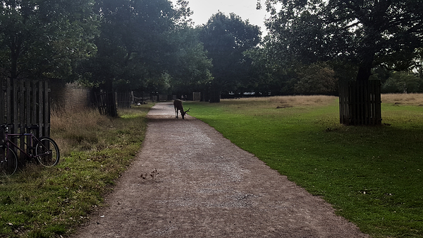 bushey-park england deer park