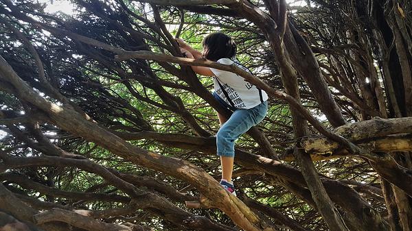 nonsuch-park park england mia tree