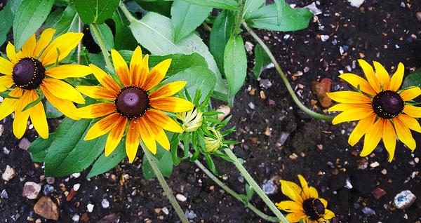 nonsuch-park garden flower england