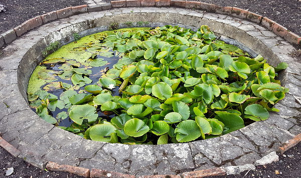 nonsuch-park garden pond lily-pad england