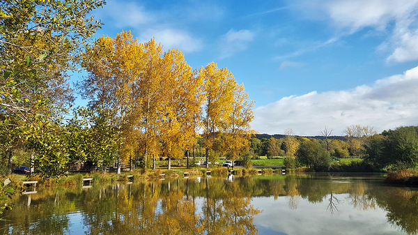 guildford england fishing lake tree