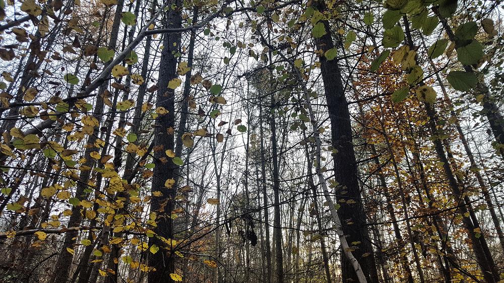norbury-park england park tree