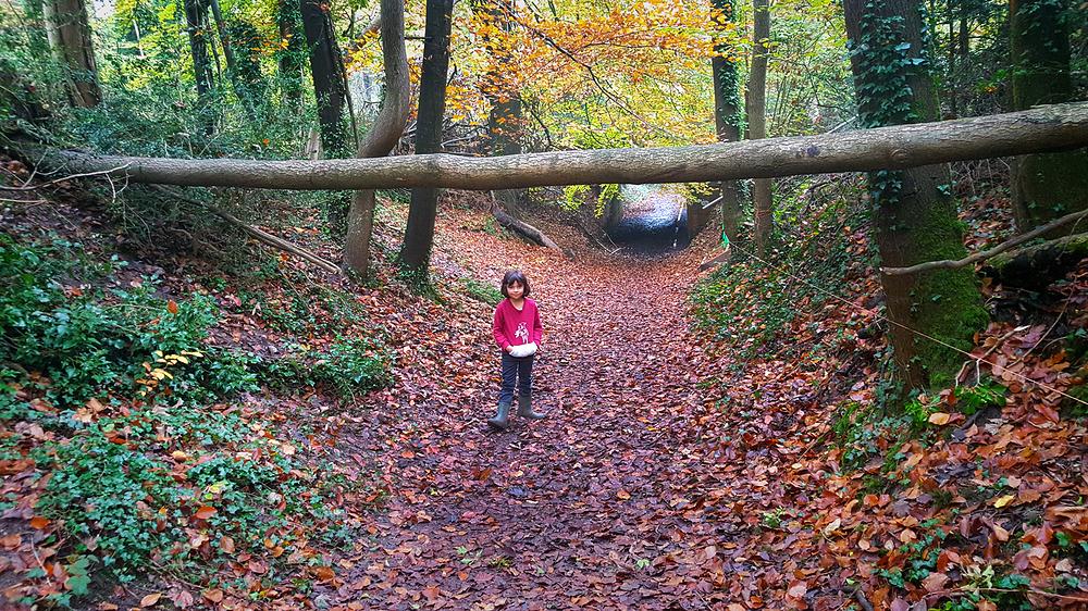norbury-park england park mia tree