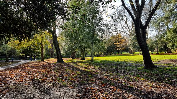 england park ewell tree ewell-court