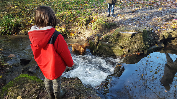 england park ewell ewell-court stream mia dog