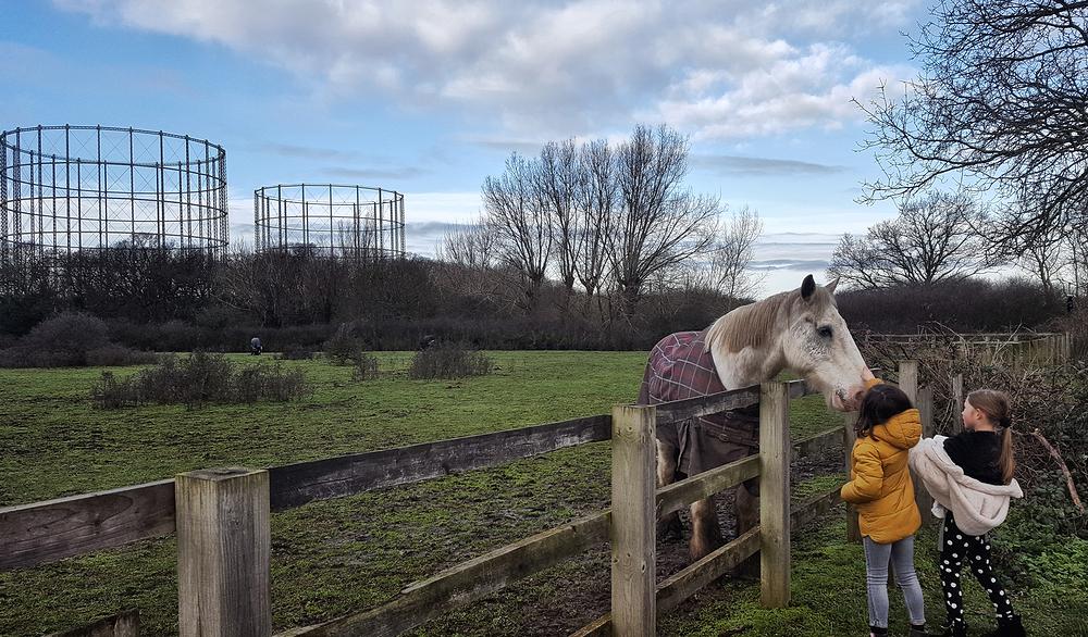 motspur-park england gasometer horse mia