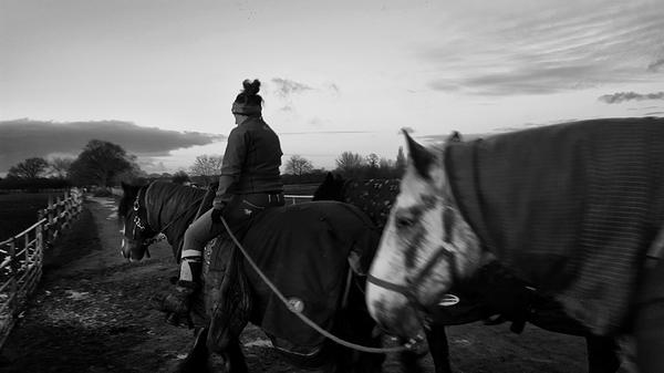 motspur-park england horse