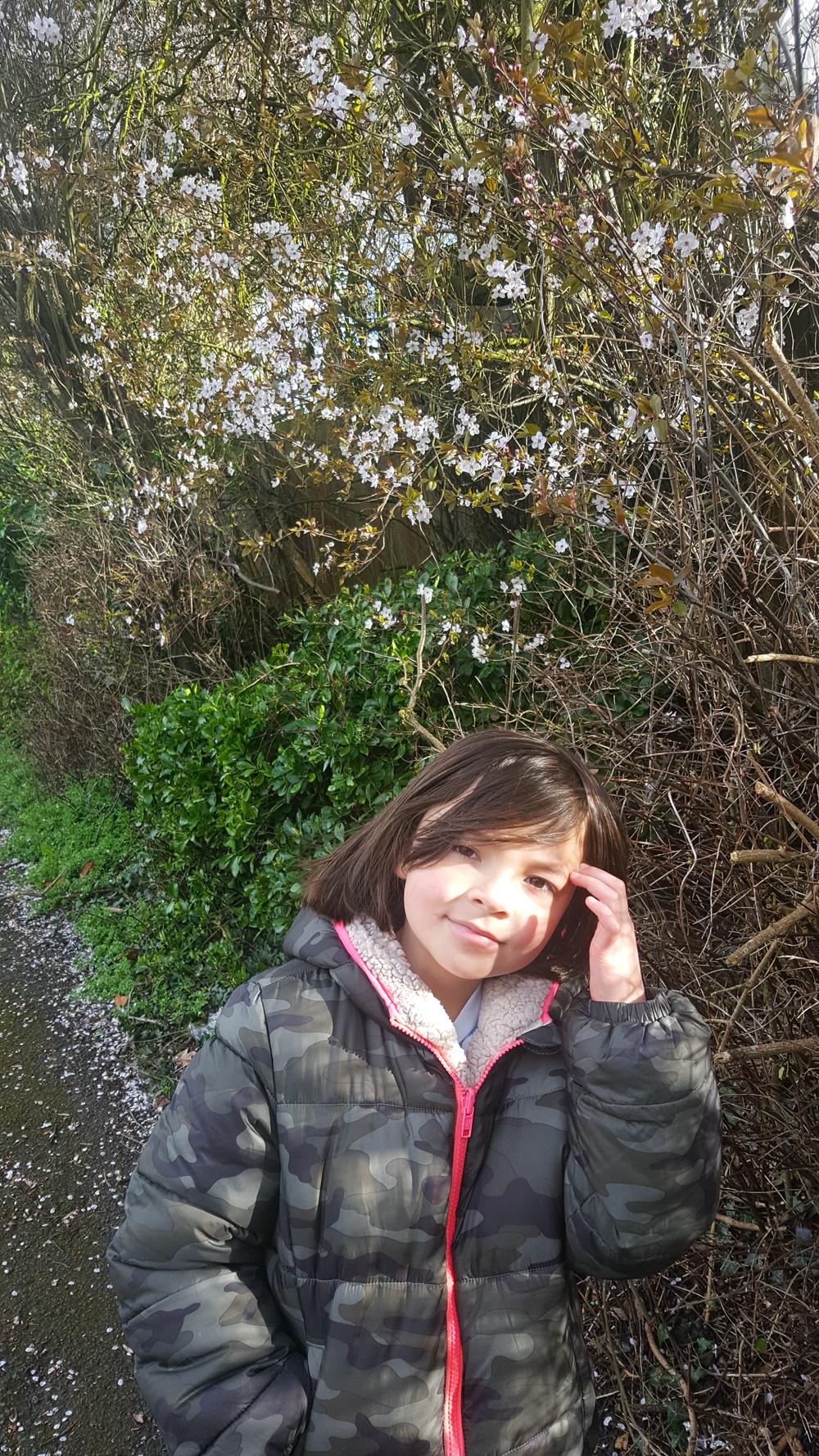 sutton england blossom tree mia