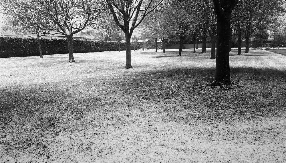 england snow sutton tree