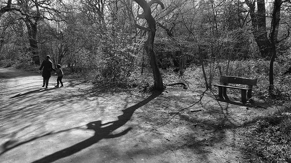 epsom epsom-common england tree mayumi mia