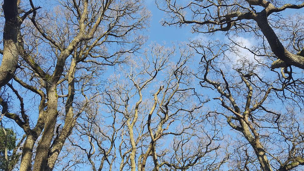 epsom epsom-common england tree park