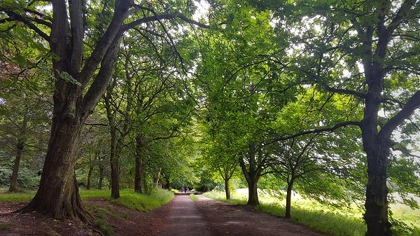 nonsuch-park park england tree