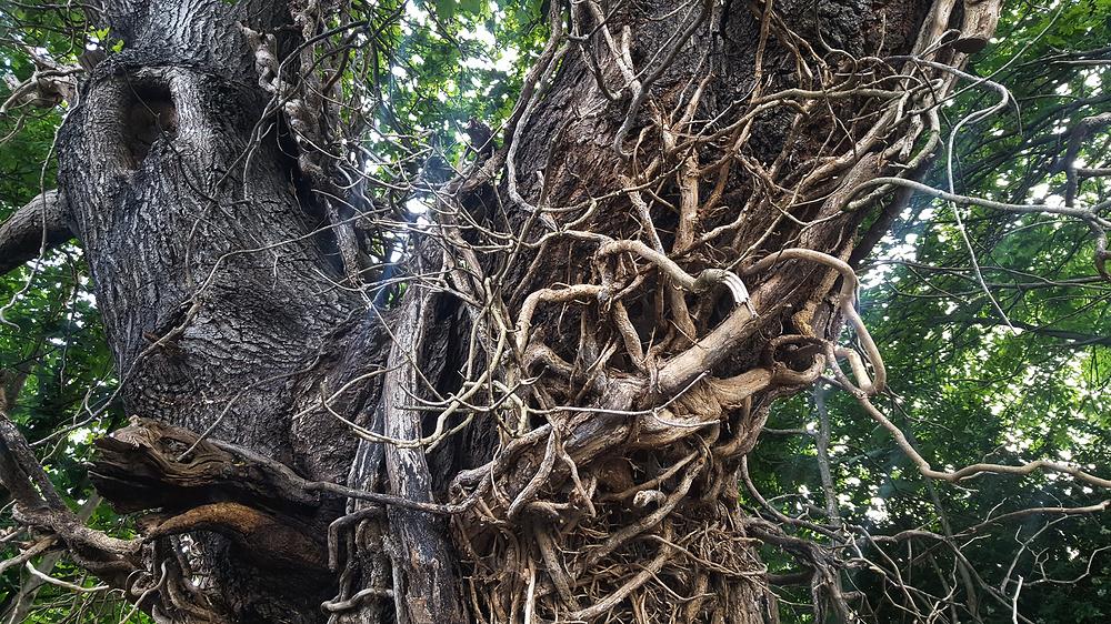 worcester-park england tree
