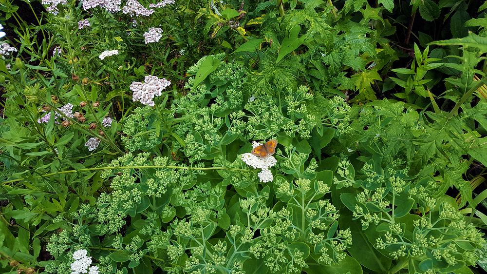 london-zoo london england butterfly