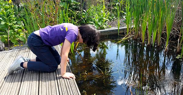 england wisley garden pond mia