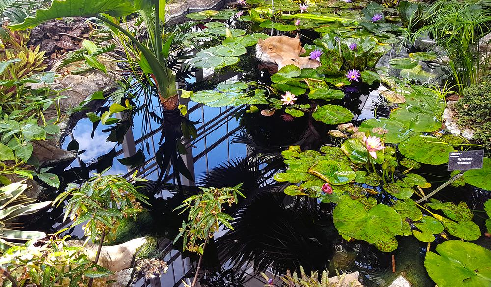 england wisley garden pond greenhouse
