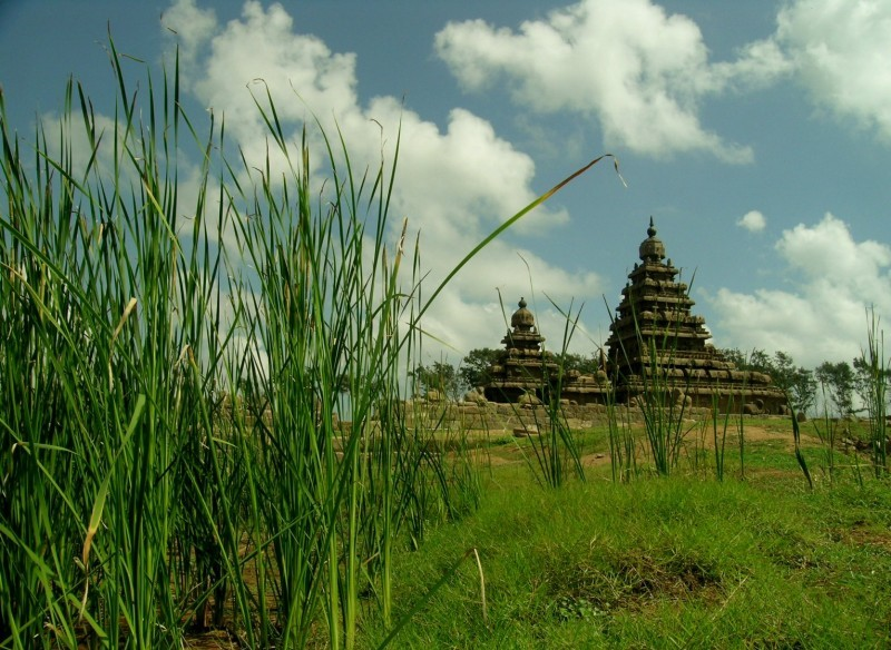 Shore temple from behind the bush