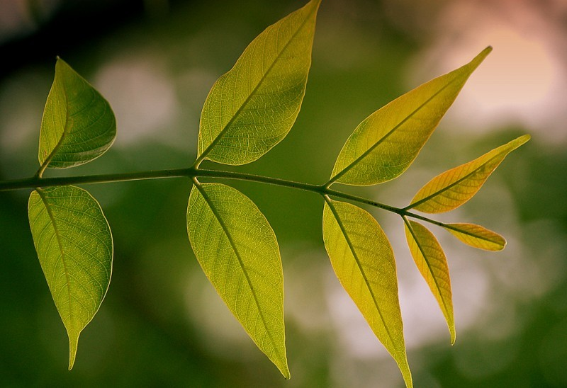 Green turning into gold