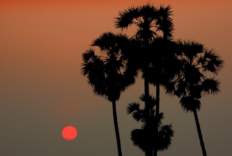 Palms and the sunset