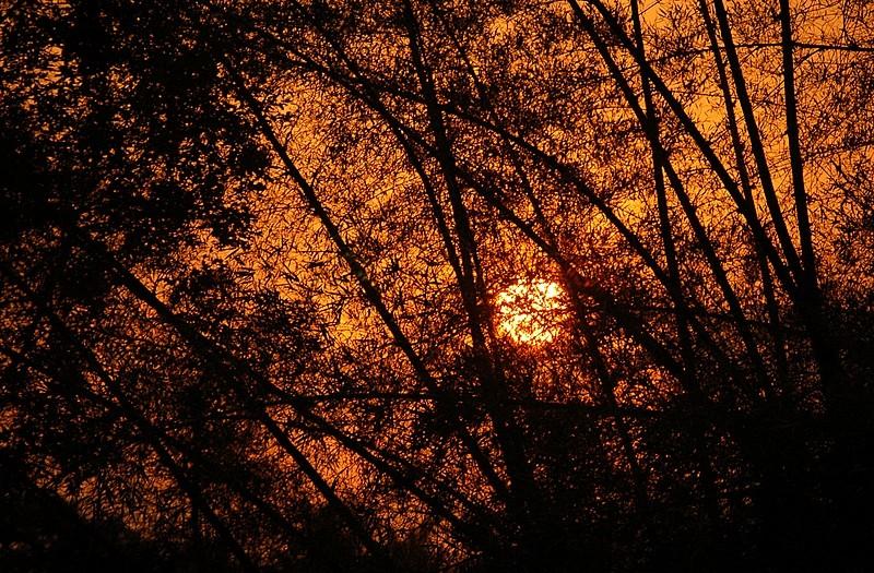 Sunset through the sharp woods of Nisargadhama