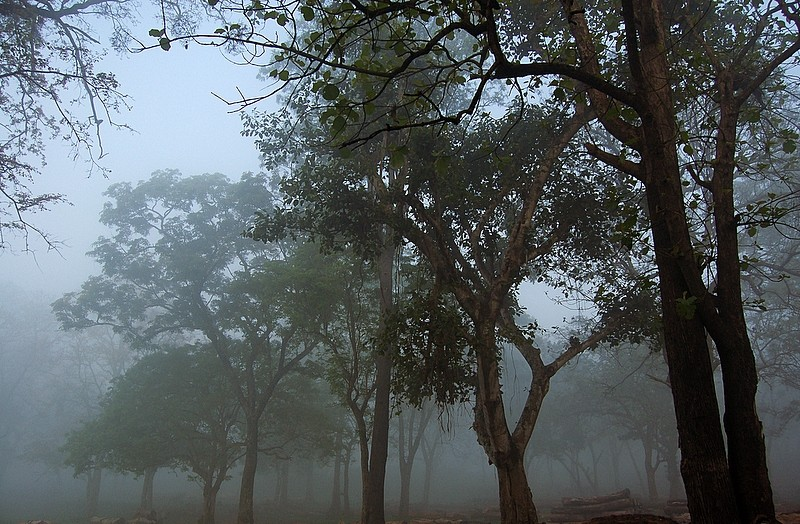 Traces of the Coorg mist all around