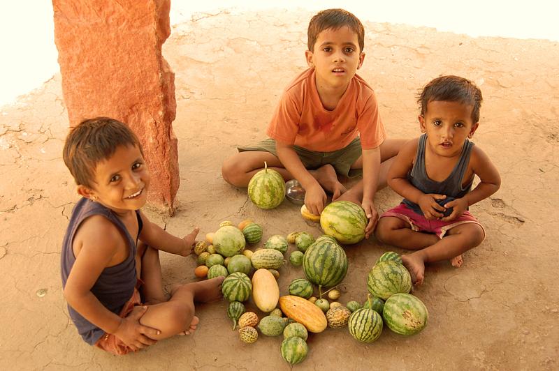 The little melon-hunters!