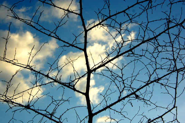 Veins and the sky!