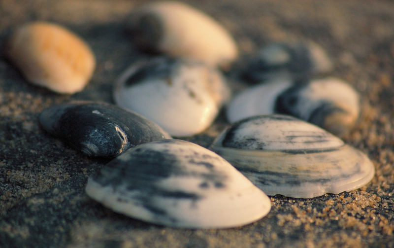 Shells of the paradise lost!