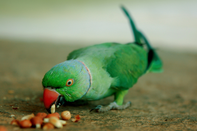 """The hungry """"Manickam""""!"""