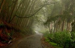 The foggy bend near the Kodai Hills