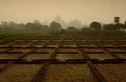 A farm at the backdrop of the stunning Taj hues!