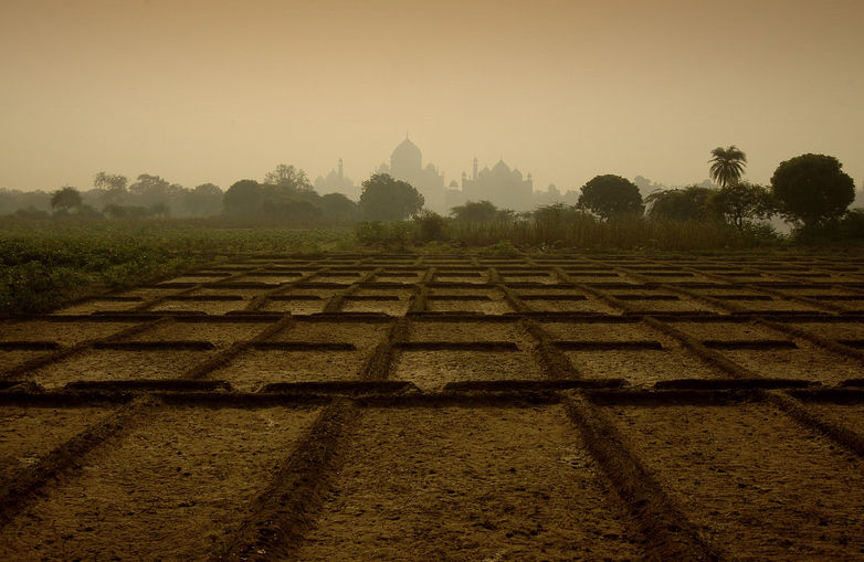 A farm at the backdrop of the stunning Taj hues!
