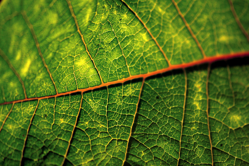 Veins and the Green!