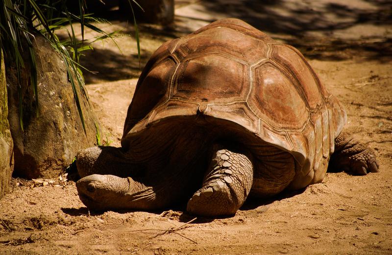 The big Turtle neck