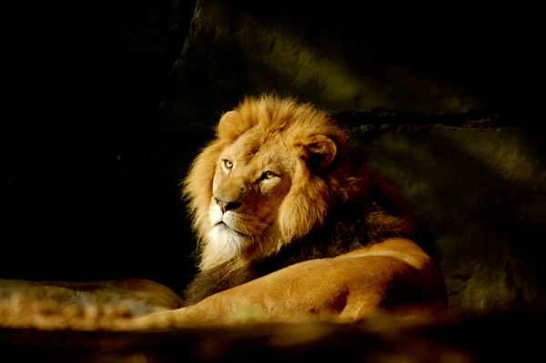 The king wakes up