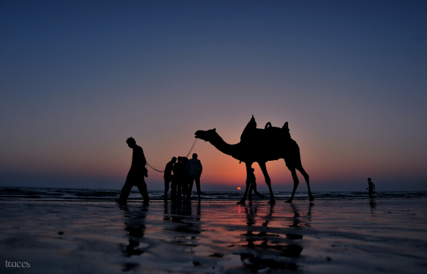 Camel ride across the Mandvi sunset!
