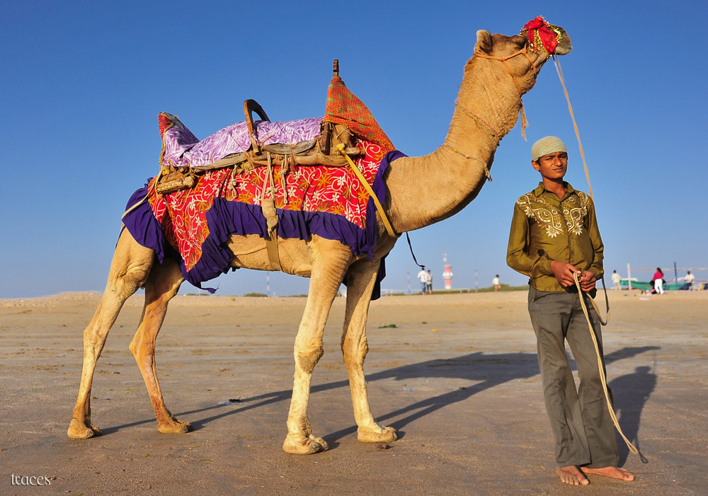 Azaad and his Camel!