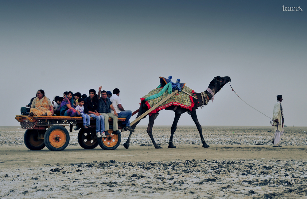 Camel cart at the white desert