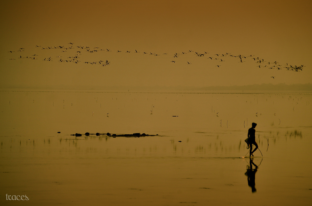 Barefoot fishing at the Pulicat Lake