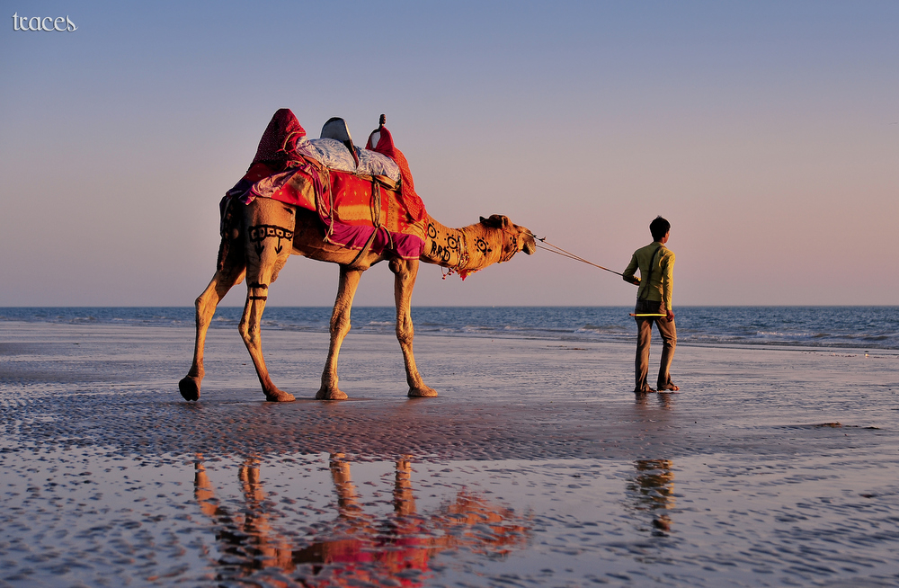 Beachwalking with his camel!