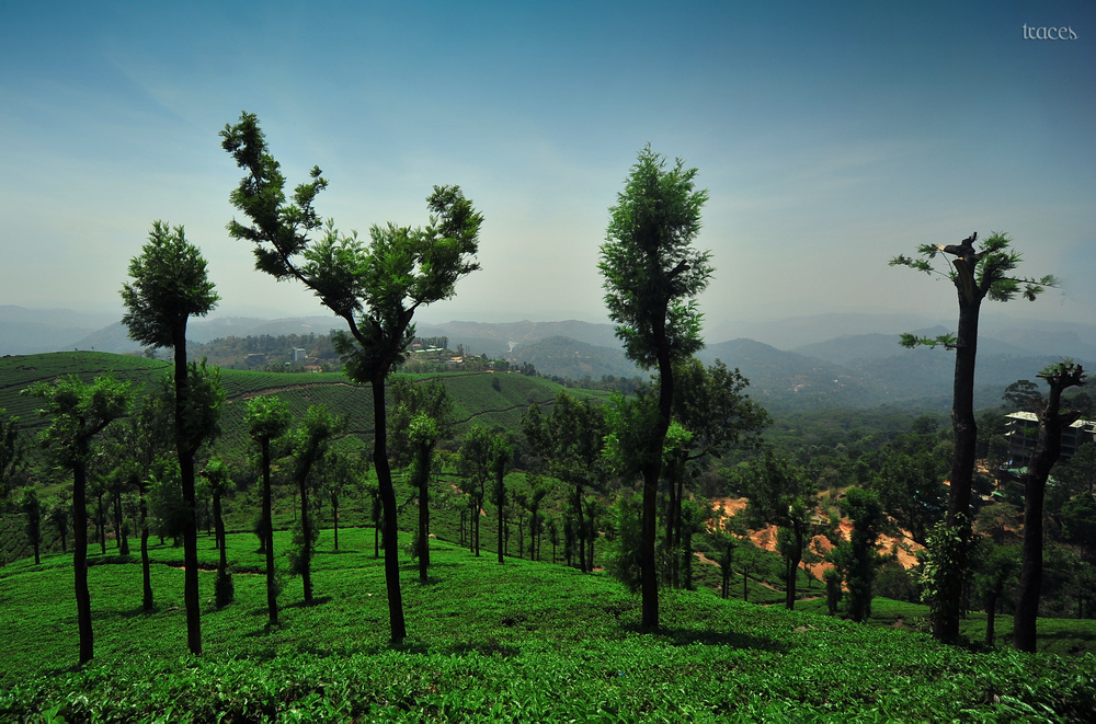 The valley of tea