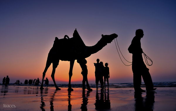 Mandvi magic ending with the camel ride!